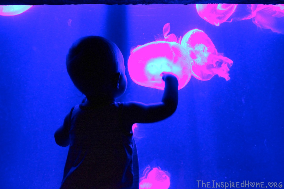 O Atlantis Jellyfish