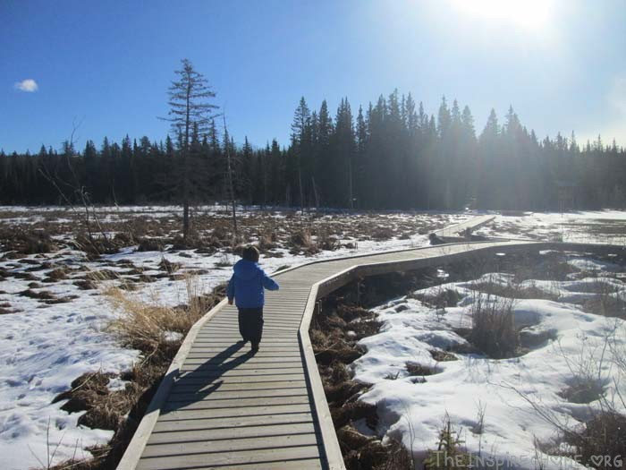 Hiking with Kids: Mr J on the Beaver Boardwalk