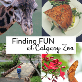 Finding Fun at the Calgary Zoo
