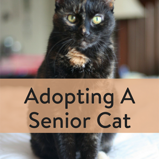 Adopting A Senior Cat